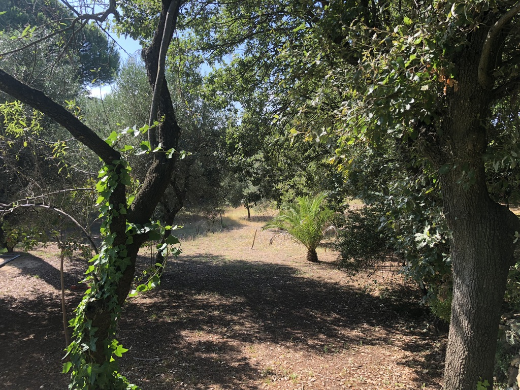 Saint-Tropez – Ref T502 – Wooded grounds near village